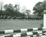 Horse Line Up
